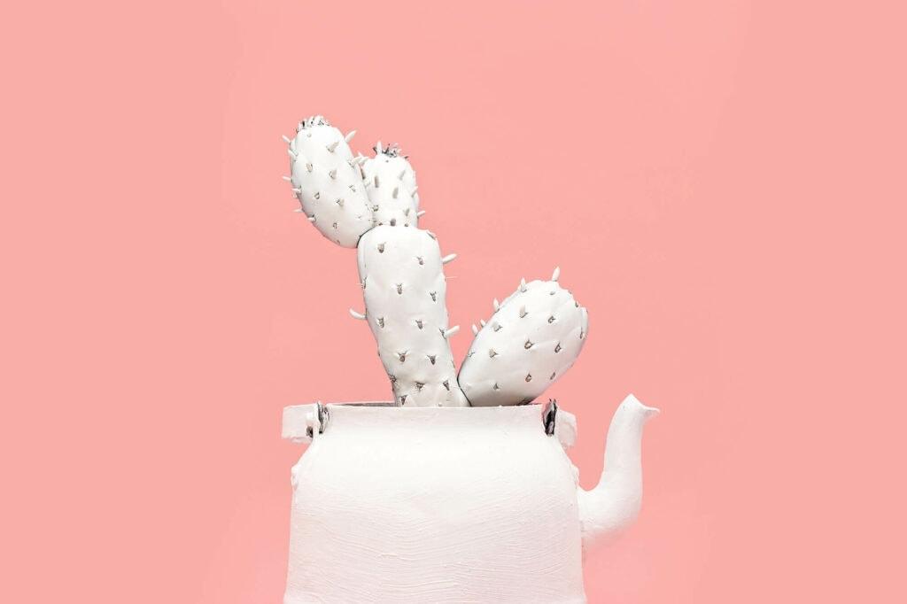 Angelique cactus